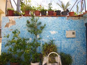 Eine tolle Sache: Der Swimmingpool im eigenen Garten