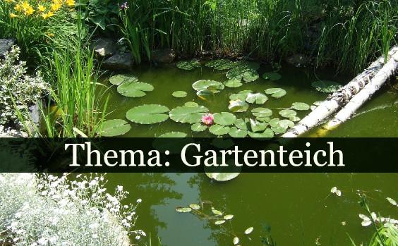 Gartenteich thema 564