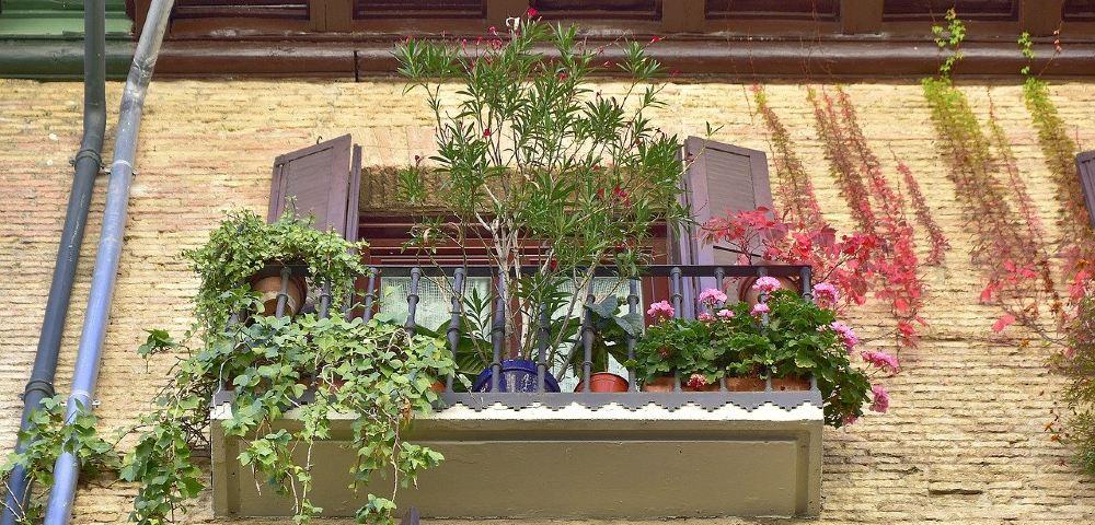 balkon rankpflanzen fenster 1000