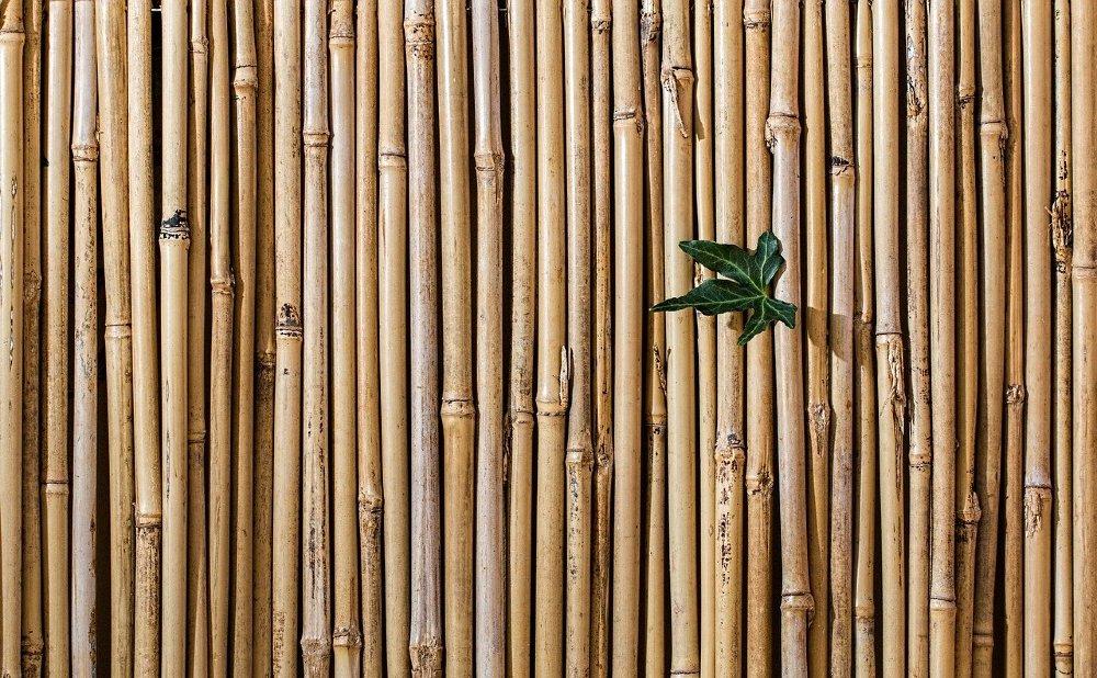 bambus zaun ir 1000