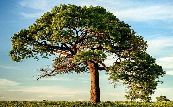 Baum auf Wiese