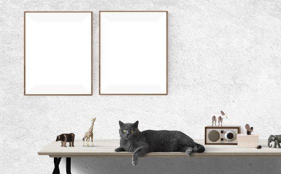 Bilder Arrangement Katze