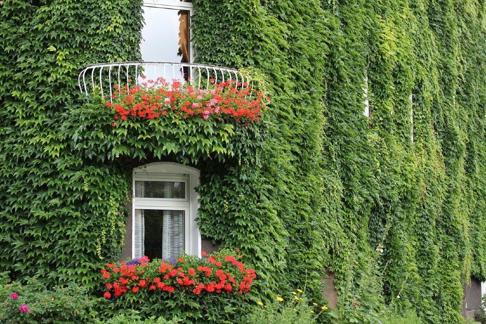 fassade gruen balkon fenster blumen 1000