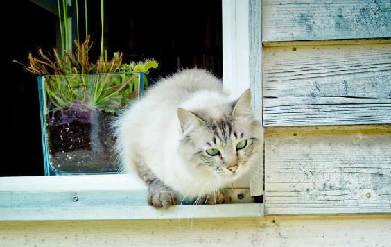 Fensterbank außen (und innen) einbauen | Anleitung | Video