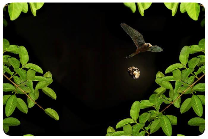 Garten Ambiente Mit Illumination