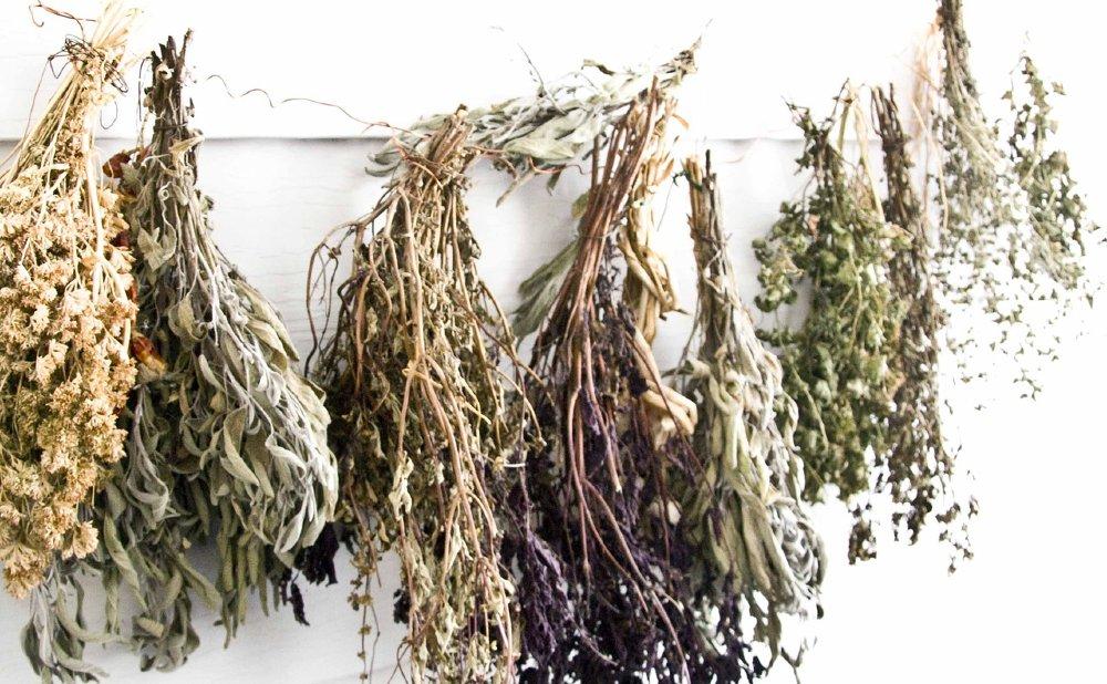 getrocknete pflanzen wand 1000