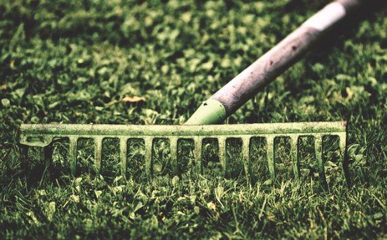 harke gruen gras old
