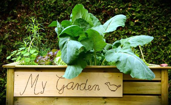 hochbeet garden 564