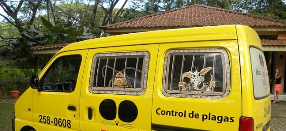 kammerjaeger auto gelb