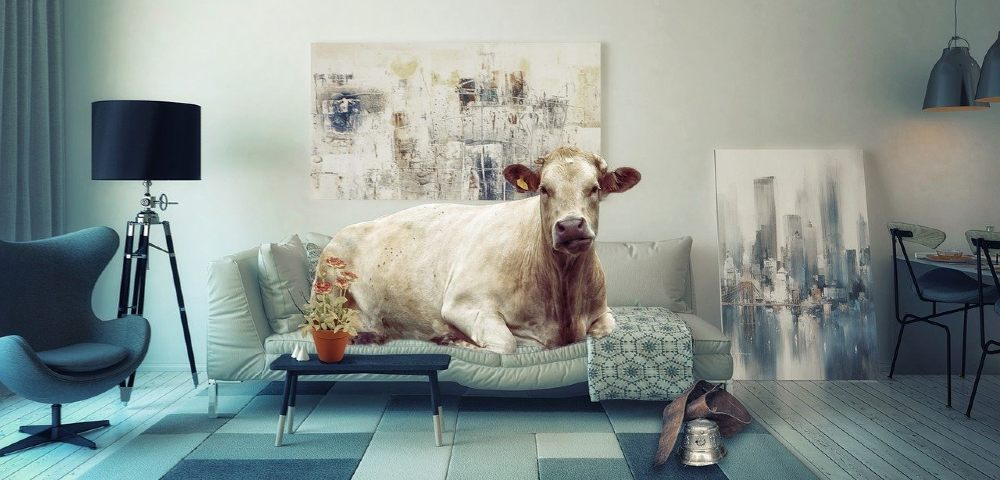 kuh sofa gewicht 1000
