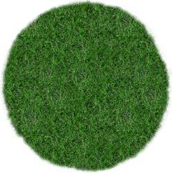 Rasen rund