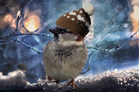 spatz muetze warm schnee h2 564
