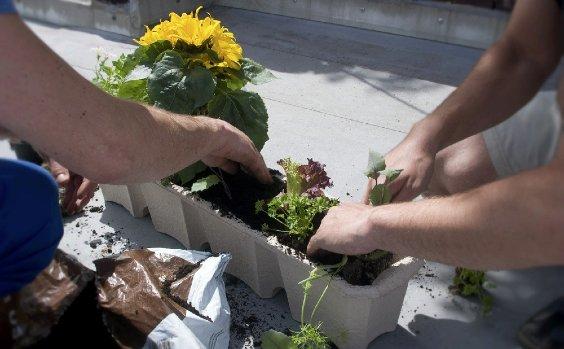 Urban Gardening Tipps
