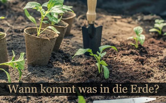 Wann Garten bepflanzen?