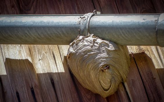 wespennest dachrinne schuppen k