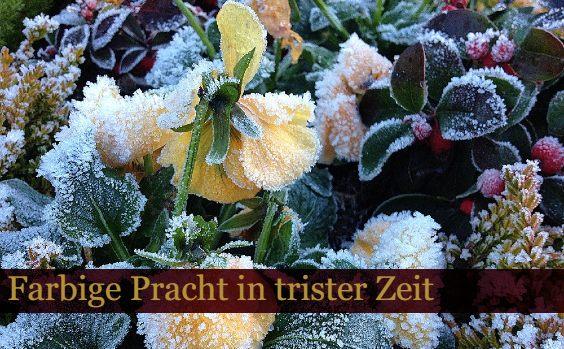 Heimische Winterblu00fcher