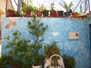 Ein Sichtschutz kann auch aus einer bemalten Wand bestehen