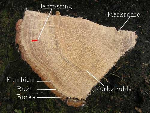 Aufbau Holz